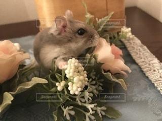 花とハムスターの写真・画像素材[991738]