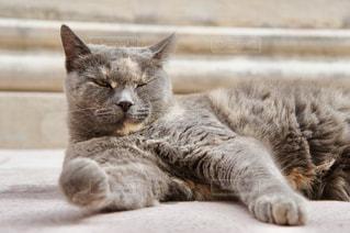 寝そべるネコの写真・画像素材[1257098]