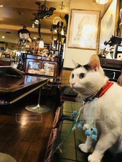 喫茶店の猫の写真・画像素材[1257099]