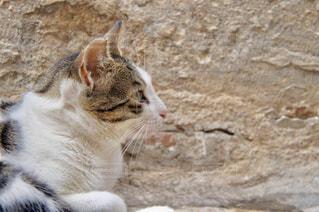 ネコの横顔の写真・画像素材[1263016]