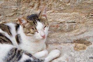 ネコの寝顔の写真・画像素材[1263018]