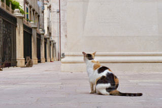 三毛猫の後ろ姿の写真・画像素材[1263029]