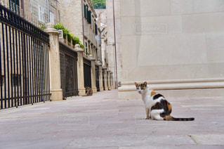 三毛猫の写真・画像素材[1263030]