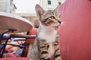 カフェのネコの写真・画像素材[1263037]