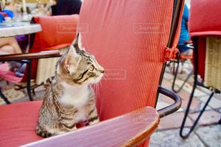 椅子に座っているネコの写真・画像素材[1263070]