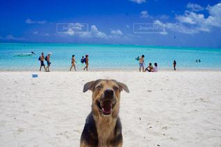 犬と海の写真・画像素材[1314608]