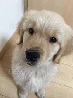 犬の写真・画像素材[32865]