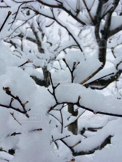 雪,白,枝