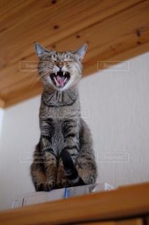 カメラにポーズを鏡の前で座っている猫の写真・画像素材[992178]