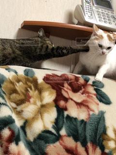 ベッドの上で横になっている猫 - No.992395