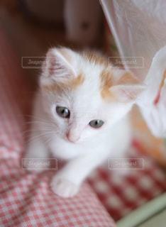その口を開いてオレンジと白猫 - No.992866