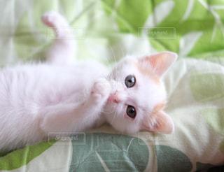 ベッドの上で横になっている猫の写真・画像素材[992877]