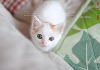 ベッドの上に座っている猫 - No.993160