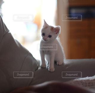 カメラを見ている猫 - No.993161