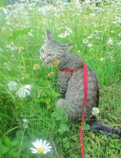 草の中に立っている猫の写真・画像素材[993164]