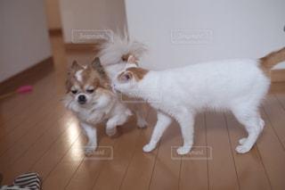 猫の横に犬の地位の写真・画像素材[993169]