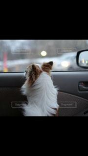 猫が車の上に座って - No.993170