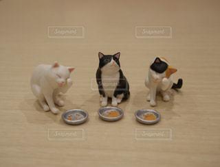 カメラを見ている猫の写真・画像素材[993191]