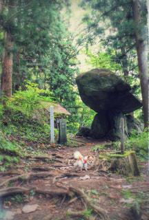 森の横に小さな象立っての写真・画像素材[993194]