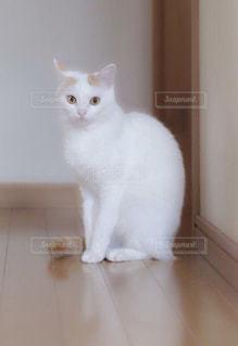白い面の上に座って猫の写真・画像素材[1212684]