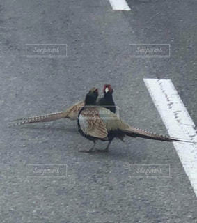 通りを歩いて鳥の写真・画像素材[1213432]