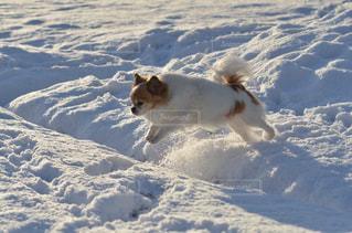 雪で覆われている犬の写真・画像素材[1666418]