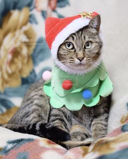 毛布の上に横になっている襟付きシャツを着て猫の写真・画像素材[1672479]