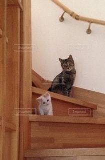 カメラを見ている猫の写真・画像素材[2740264]