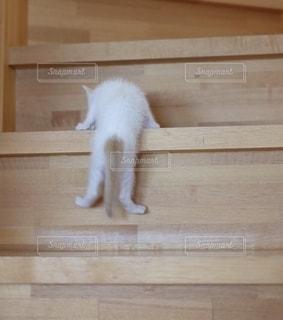 木製のキャビネットの上に立っている白い猫の写真・画像素材[2742120]