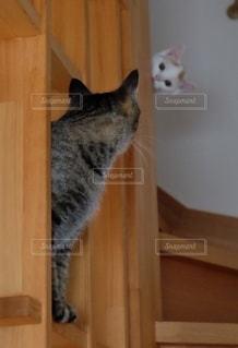木製のキャビネットの上に座っている猫の写真・画像素材[2742125]