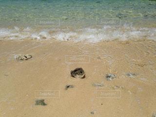 海,沖縄,貝,宮古島,休日