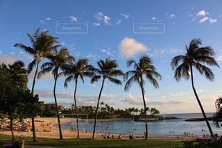 ハワイの風景の写真・画像素材[998287]