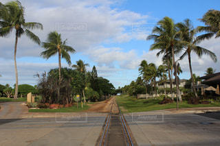 雲,線路,アメリカ,ヤシの木,ハワイ