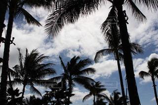空,太陽,雲,アメリカ,ヤシの木,ハワイ