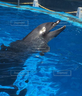 イルカ,水族館