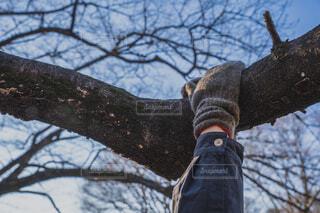 公園の木の枝にぶら下がる、手袋をした彼女の手の写真・画像素材[4047112]