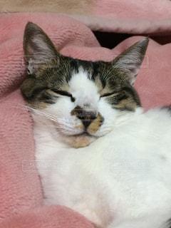 毛布の上に横になっている猫のアップの写真・画像素材[994037]
