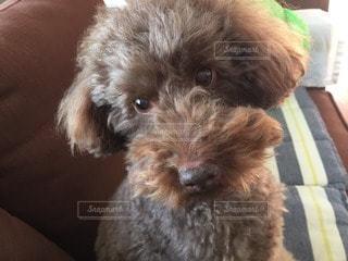 犬の写真・画像素材[33049]