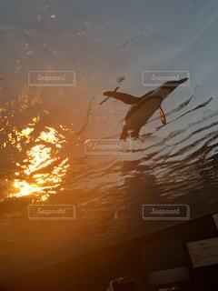 夕日,動物,屋外,太陽,夕暮れ,水族館,ペンギン,休日,空飛ぶ