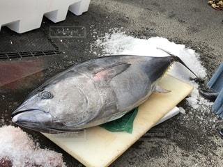 近くに魚のアップの写真・画像素材[1008722]
