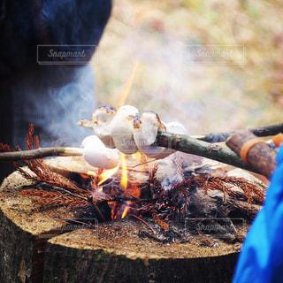 自然,アウトドア,お菓子,キャンプ,炎,焚き火,休日,マシュマロ,燃やす,ぬくもり,お出かけ,フォトジェニック,焼きマシュマロ,スウェーデントーチ,スウェディッシュトーチ