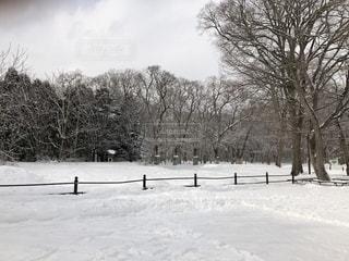 森林,雪,屋外,景色,樹木