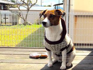 フェンスの前に座っている犬 - No.1000459