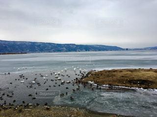 自然,風景,空,冬,鳥,屋外,海岸,旅行,日本,長野,長野県,信州,諏訪湖,諏訪,諏訪市,諏訪湖の御神渡り,御神渡り