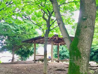 西藤公園の写真・画像素材[1025832]