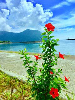 下甑島の写真・画像素材[1026839]