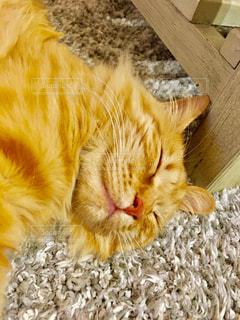 夏,動物,暑い,ねこ,寝顔,可愛い,夏バテ