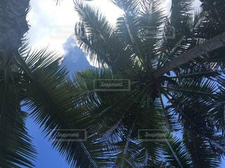 空,屋外,海外,青空,アメリカ,樹木,旅行,ヤシの木,グアム,グリーン,GUAM,ブルースカイ