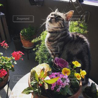おすまし猫の写真・画像素材[997459]