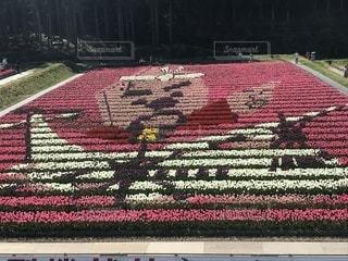 花,夏,チューリップ,関西